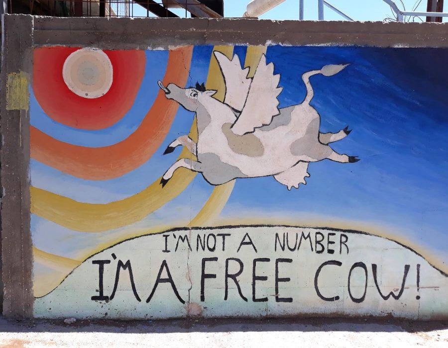 I am a free cow